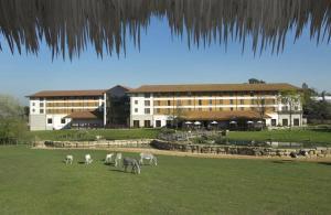 Chessington Safari Hotel (32 of 41)
