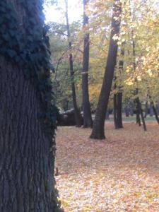 Csigaház panzió, Penziony  Gyula - big - 88
