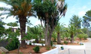 Hacienda Encanto del Rio, Apartmány  Es Figueral Beach - big - 62