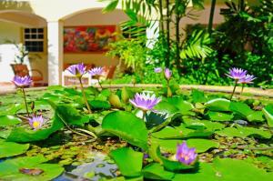 Blue Horizons Garden Resort (29 of 35)