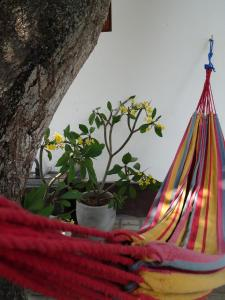 Ok Cabana Negombo, Апартаменты  Негомбо - big - 3