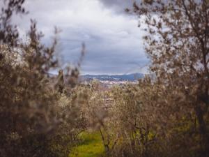 B&B La Collina Toscana, Farmházak  Pieve a Maiano - big - 22
