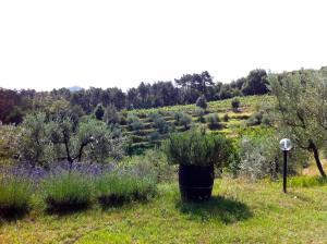 Agriturismo Fattoria Di Gratena, Farmházak  Pieve a Maiano - big - 34