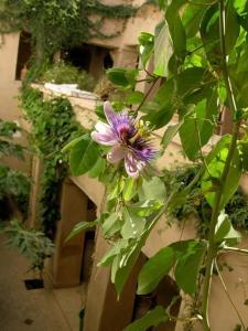 Dar Zahia, Guest houses  Taroudant - big - 55
