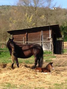 Fattoria Settemerli, Farmy  Florencia - big - 60
