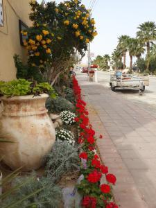 Rose Dead Sea Neve Zohar, Penzióny  Neve Zohar - big - 73