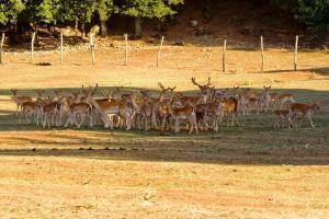 Umbria Volo Country Resort, Case vacanze  Montecastrilli - big - 62