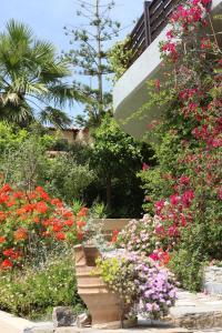 Villa Galini, Apartmány  Agios Nikolaos - big - 90