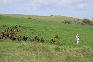 Ca' Lupino, Farmy  Urbino - big - 24