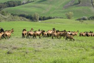 Ca' Lupino, Farmy  Urbino - big - 23