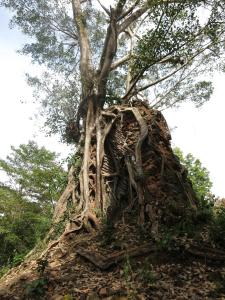 Isanborei homestay 10, Ubytování v soukromí  Kâmpóng Chheutéal - big - 10