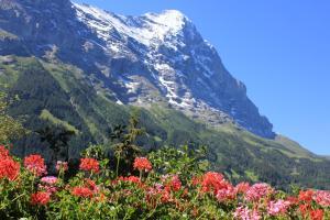 Alpenhof, Hotely  Grindelwald - big - 9