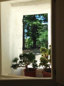 Trulli&Stelle B&B, Загородные дома  Noci - big - 36