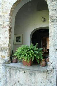 Rosacanina B&B, Bed & Breakfast  Torchiara - big - 10