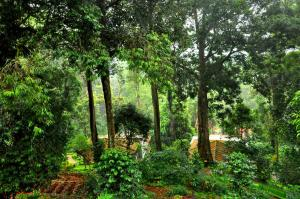 The Tall Trees, Resorts  Munnar - big - 30