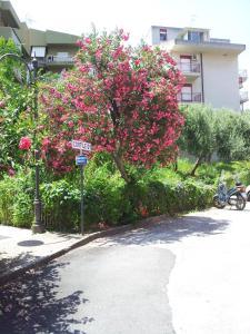 Le Giarette, Apartmány  Cefalù - big - 2