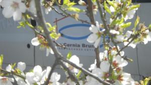 Case Vacanze La Cernia Bruna - Ustica