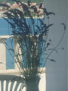 Apartments Villa Iva Alla, Appartamenti  Trogir - big - 25