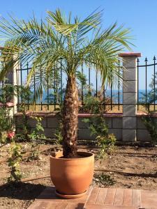 Villa Bellerose, Case vacanze  Bozhurets - big - 23