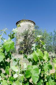 Chateau Pech-Céleyran, B&B (nocľahy s raňajkami)  Salles-d'Aude - big - 39