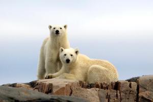 Radisson Blu Polar Hotel, Spitsbergen, Hotely  Longyearbyen - big - 23