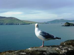 Cill Bhreac House B&B, Bed and Breakfasts  Dingle - big - 19