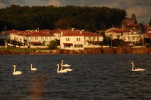 Igneada Parlak Resort Hotel, Szállodák  Igneada - big - 49