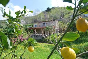 Al Melograno B&B, Bed & Breakfasts  Belmonte Calabro - big - 2