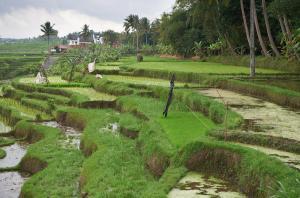 Balam Bali Villa, Penziony  Mengwi - big - 38