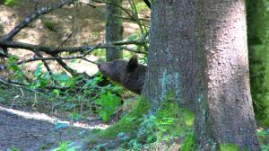 Dobrica Hunting Lodge, Lodges  Bixad - big - 14