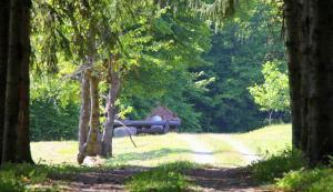 Dobrica Hunting Lodge, Lodges  Bixad - big - 17