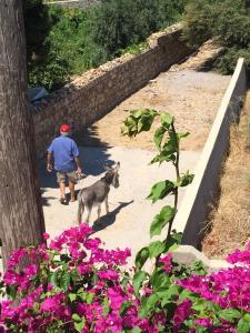 Patmos Villas, Ferienwohnungen  Grikos - big - 14