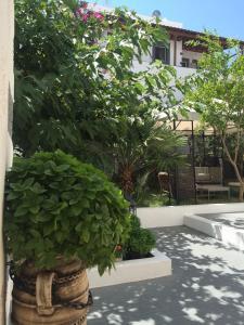 Patmos Villas, Апартаменты  Грикос - big - 144