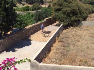 Patmos Villas, Appartamenti  Grikos - big - 90