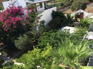 Patmos Villas, Appartamenti  Grikos - big - 39