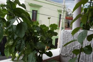 Casa sicarú, Apartmány  Oaxaca City - big - 14