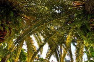 Twin Palms at Siesta, Hotely  Sarasota - big - 9
