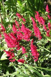 Cascades Gardens, Bed & Breakfasts  Matlock - big - 23
