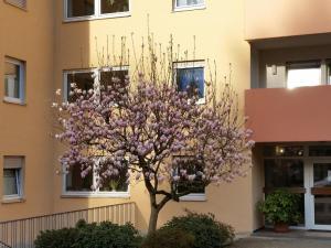 Ferienwohnung am Kugelberg, Apartmanok  Gernsbach - big - 3
