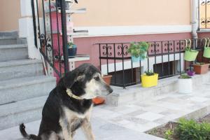 Ede Apart Otel, Aparthotels  Geyikli - big - 113