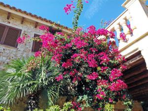 Villa Can Juanito, Vily  Porto Cristo - big - 9