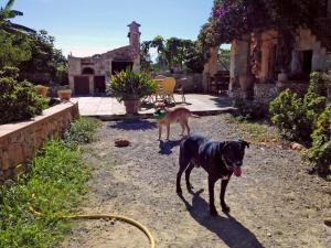 Villa Can Juanito, Vily  Porto Cristo - big - 11