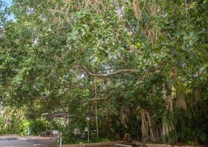 Southside Holiday Village, Villaggi turistici  Rockhampton - big - 36