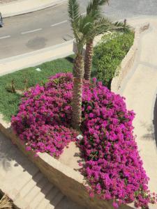 Azzurra two-Bedroom Apartment at Sahl Hasheesh, Apartmány  Hurghada - big - 14