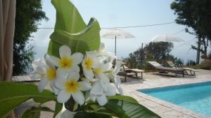 Villa Morosi, Apartments  Favone - big - 94