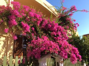 Eriketi Studios, Apartments  Agia Marina Aegina - big - 24