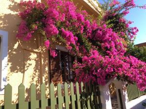 Eriketi Studios, Apartments  Agia Marina Aegina - big - 23