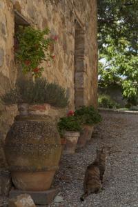 Quercia Al Poggio, Фермерские дома  Барберино-Валь-д'Эльса - big - 69