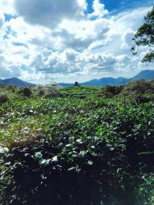 La Montagne, Villák  Depedene - big - 40