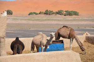 Riad Desert Camel, Hotels  Merzouga - big - 35